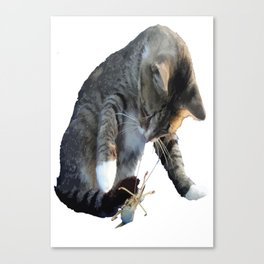 White Pawed Tabby Cat Playing With Winged Insect Canvas Print