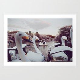 Inokashira Swans Art Print