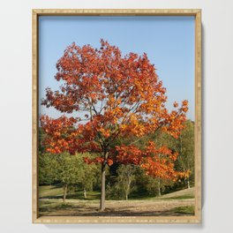 Autumn Colours in Greenwich Park, London Serving Tray