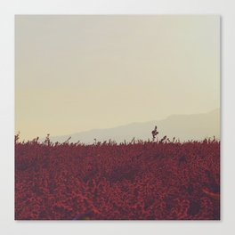 Field of Red Canvas Print
