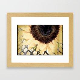 Faded Flower Framed Art Print