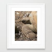 tortoise Framed Art Prints featuring Tortoise by Kamero Designs