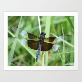 dragonfly 2015 IV Art Print