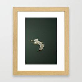 Gliding over the ocean Framed Art Print