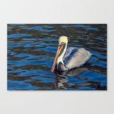 Wet Pelican Canvas Print