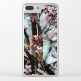 Peek-A-Boo - Spring Finch Clear iPhone Case