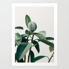 Botanical V2 Art Print