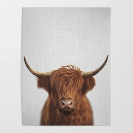 Highland Cow - Colorful Poster