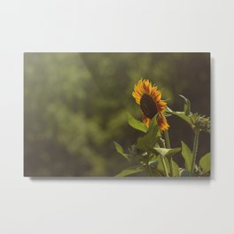 Single Sunflower Metal Print