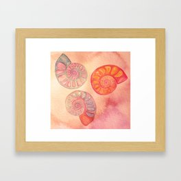 Seashells Framed Art Print