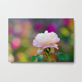Beautiful Pink Freckled Rose Flower, Colorful Background Metal Print