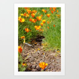 A Walk in the Poppies  Art Print