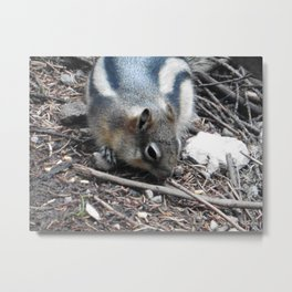 Snacktime Squirrel  Metal Print