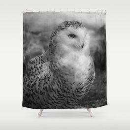 Snowy Owl - B & W Shower Curtain