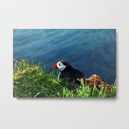 Puffin - Iceland national bird Metal Print