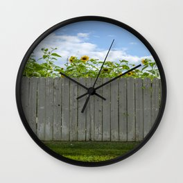 Sun flowers behind a fence  Wall Clock