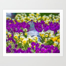 Pigeon and Pansies Art Print