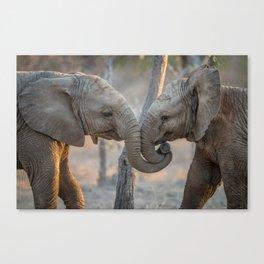 Elephants cuddling Canvas Print