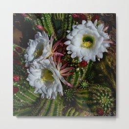 White Argentine_Giant_Cacti in Bloom Metal Print