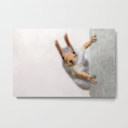 Squirrel - Who are you? Metal Print