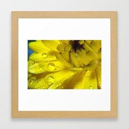 Fresh Wet Yellow Framed Art Print
