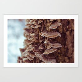 Tree Mushrooms Art Print