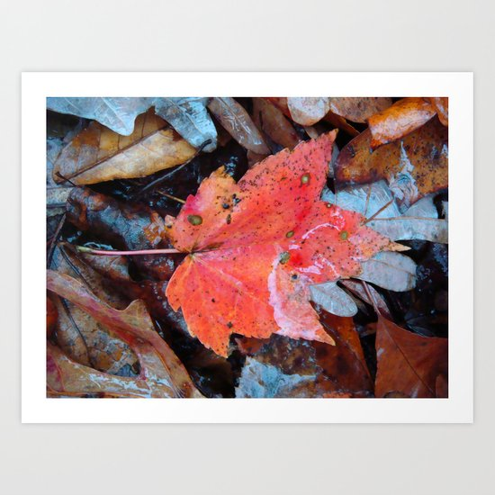 autumnal reverie 646 Art Print