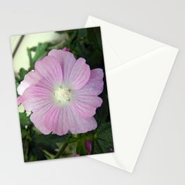 Pink Musk Mallow Stationery Cards