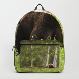 Amazing Huge Adult Grizzly Bear Strolling Proudly Across Wood Clearing Ultra HD Backpack