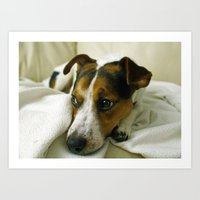 jack russell Art Prints featuring jack russell by Brmbrmba27