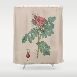Rosa JP Redoute Shower Curtain
