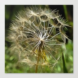 Tragopogon Wildflower Salsify Canvas Print