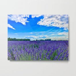 Wildflowers Blooming in a Meadow | Purple Lavender Perennials Deep Blue Sky Spring Landscape France Metal Print