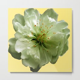 Delicate White Flower Blossom & Cream Color Metal Print