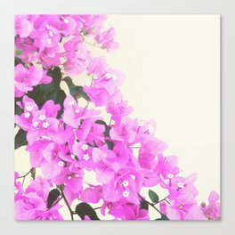 Pink Grecian Flowers Canvas Print
