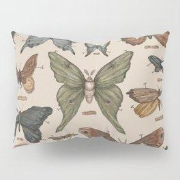 Butterflies and Moth Specimens Pillow Sham
