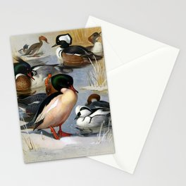 Red breasted Merganser Goosander Hooded Merganser Smew6 Stationery Cards