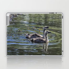 Two Goslings Taking a Swim, No. 2 Laptop & iPad Skin