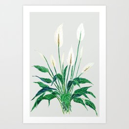 peace lily painting Art Print