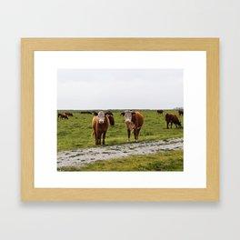 California Cows Framed Art Print