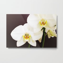 White Orchid 2020 Metal Print