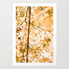 Japanese Maple Tree Leaves Art Print