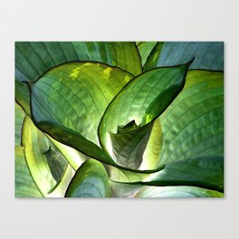 Hosta - Inverted Art Canvas Print