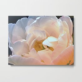 My favorite tulip -- Tulipa Angélique Metal Print