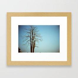 The Last Tree Framed Art Print