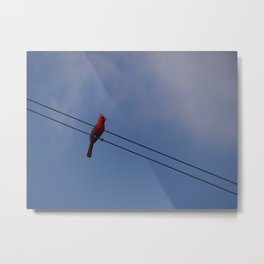 Cardinal on the Wire Metal Print