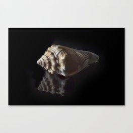 Spiral Sea Shell Canvas Print