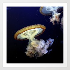 Japanese Sea Nettles Art Print
