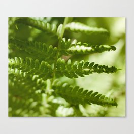 Fern Photography Print Canvas Print