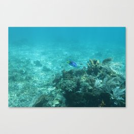 Dory (Blue Tang) Canvas Print